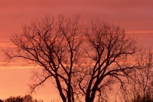 Pink sunset behind a tree without any leaves